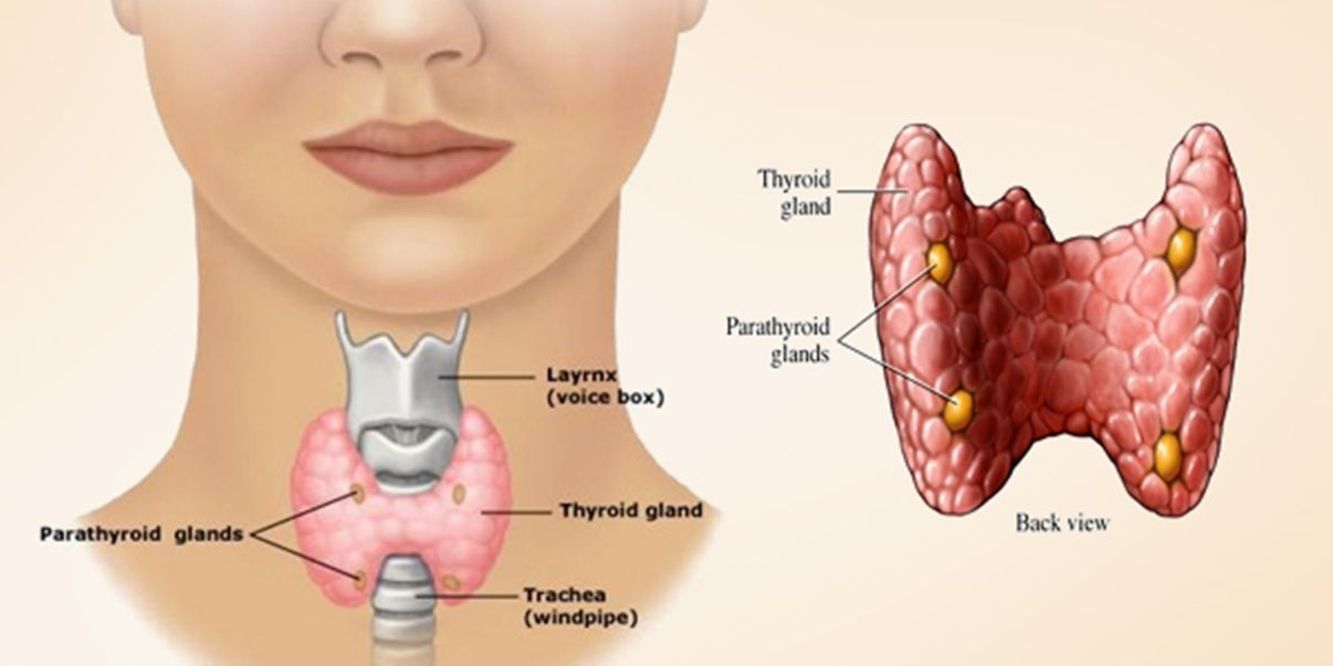 If you also want to get rid of #Thyroid problem, then these…