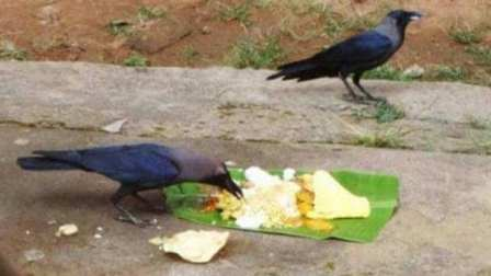 In #PitruPaksha, Shraddha of every date has special significance, but ...
