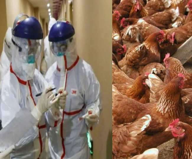 Learn how safe to eat chicken during #BirdFlu?