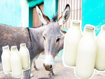 DONKEY's milk will be sold in the country Price will be surprised